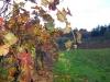 1-the-vines