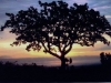 Witness Tree at sunset - (cci00004-wc)