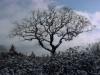 Witness Tree in winter - (cci00011-wc)