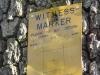 Witness Tree marker - (dsc02314)